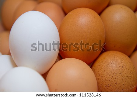 fresh organic with whites eggs for sale at a market