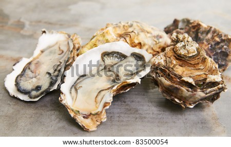 fresh oyster on mable table top ready to serve - stock photo