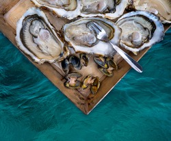 Fresh oysters and sea clams of Meretrix Lyrata, part of sea food portion in a wooden plate with a fork, top view. Freshly caught of molluscs on the oyster farm on the French Riviera.