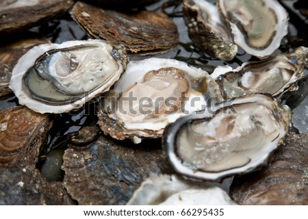 Fresh oysters are laid out on the ice.