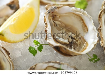 Fresh oysters platter served in ice with lemon