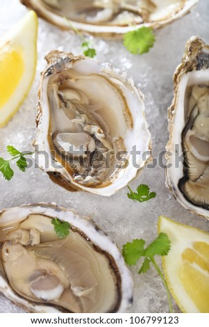 Fresh oysters platter served in ice with lemons