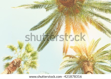fresh palm trees  and sun on blue sky, retro toned