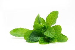 fresh paper mint on isolated white background.