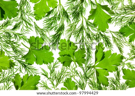 Fresh Parsley and Dill / close-up background / back-lit