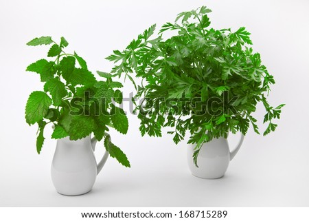 Fresh parsley and mint in jugs on a white background - stock photo