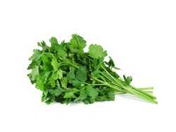 Fresh parsley bunch isolated on white background. Green spicy herbs.