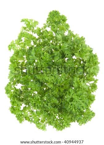 fresh parsley isolated on white background #40944937