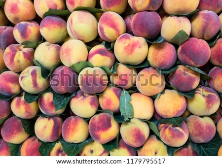 Fresh peaches fresh from the branch #1179795517