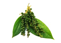 Fresh Peppercorn Berries on a Pepper Vine Leaf isolated with clipping