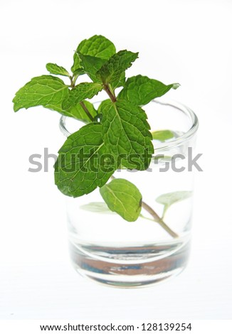 Fresh peppermint in the cup on white background