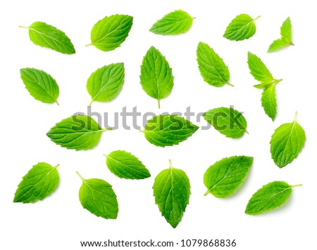 fresh peppermint leaves isolated on white, top view #1079868836