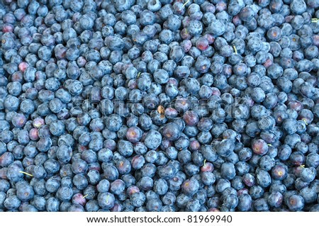 Fresh picked blueberries on display at the farmer's market