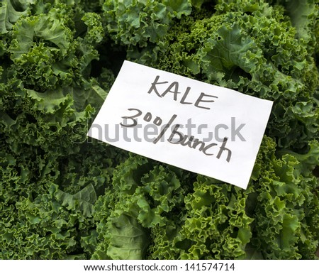 Fresh picked Kale at Maryland farm market.