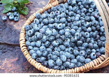 Fresh picked organic blueberries in a basket on a rustic slate background. Shallow depth of field with some blur on handle.