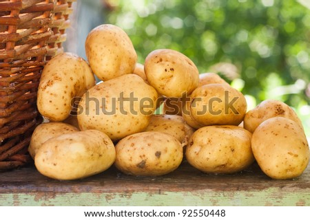 Fresh picked potatoes next to a woven basket