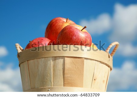 fresh picked red apples in a wooden basked againts a blue sky background outside in the autumn sun