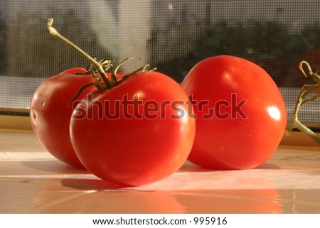 Fresh picked vine ripe red tomatoes \