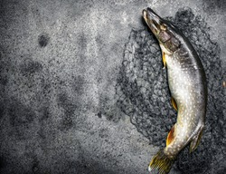 Fresh pike with a fishing net. On a rustic background.