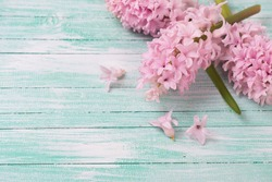 Fresh pink hyacinths flowers on turquoise painted wooden background. Selective focus. Place for text.