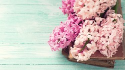 Fresh pink hyacinths on old books on  turquoise painted wooden background. Selective focus. Place for text. Toned image.