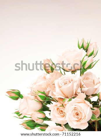 stock photo : Fresh pink roses border, beautiful isolated flowers