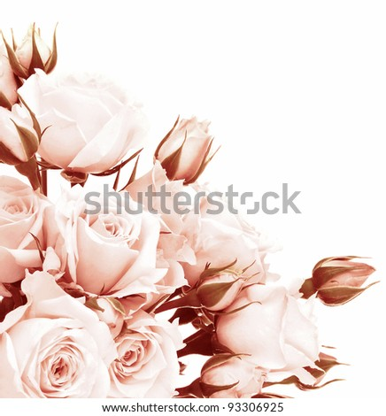 Fresh pink roses border, beautiful isolated on white flowers, corner composition, holiday rose gift, love concept