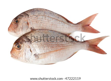 fresh pink sea bream (pagellus) isolated on white background