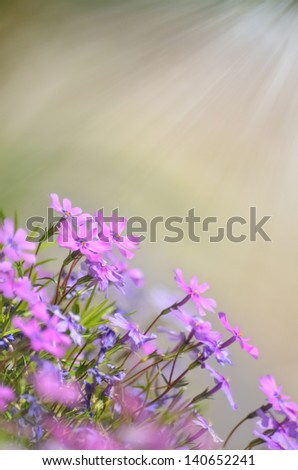 Fresh, pink, soft spring blossoms on pink bokeh background. - stock photo