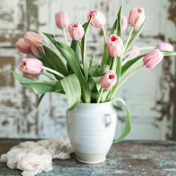 Fresh pink tulips are a bouquet of flowers placed in a pot.