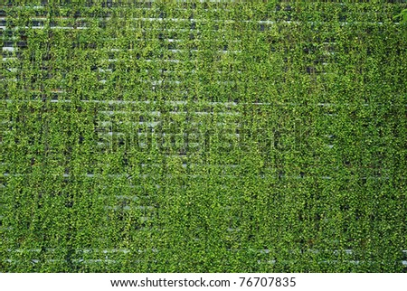 Fresh plants walls in spa for background - stock photo