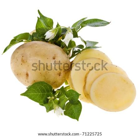 fresh potato tubers isolated on white