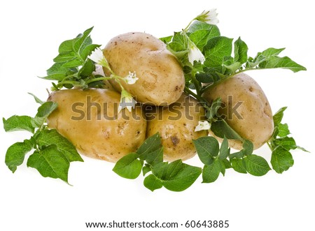 fresh potato tubers with a flower isolated on white
