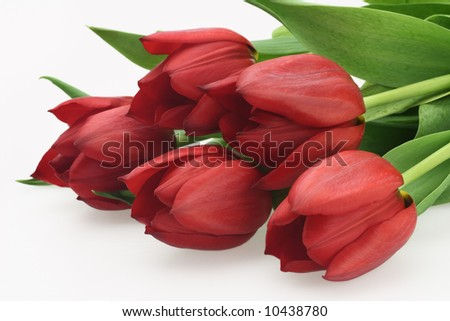 fresh pretty bouquet of red tulips isolated