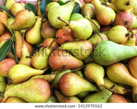 Fresh produce of freshly picked pears  #1413970562