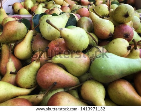 Fresh produce of freshly picked pears  #1413971132