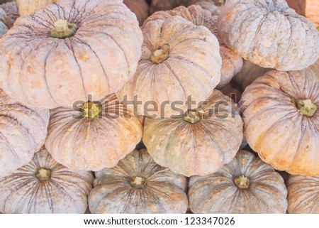 Fresh pumpkin big size stacked ready for sale.