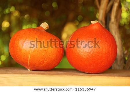 Fresh pumpkins in autumnal garden. For Halloween, thanksgiving holiday, autumn theme