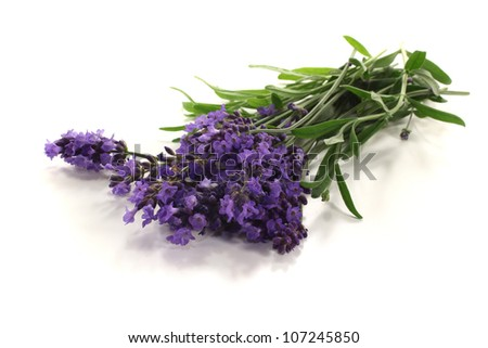 fresh purple lavender with flowers and leaves on a light background