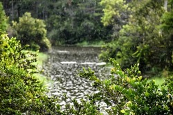 Fresh rain splashing in the bayou water