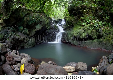 Fresh rain water flows downhill through a lush rainforest on the island of Raiatea in French Polynesia.  This region is filled with idyllic beaches, jungles, and islands.