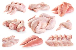 Fresh raw chicken and chicken parts isolated on white background. Breast, wings and legs. With clipping path.