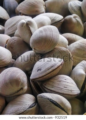 Fresh raw clams for sale in a market