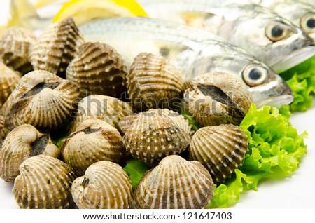 Fresh raw clams prepared with mackerel fish
