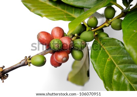 Fresh raw coffee beans isolated on white background, selective focus.
