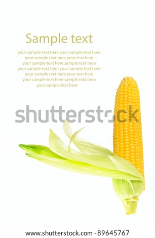 Fresh raw corn cob with leaves isolated on the white with sample text