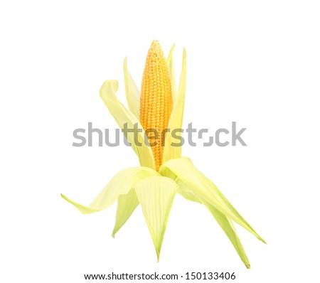 Fresh raw corncob isolated on the white