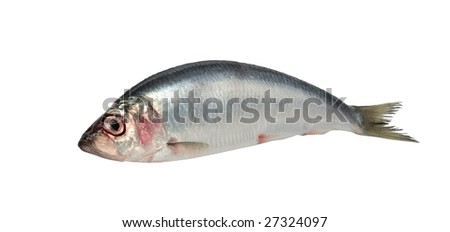 Fresh raw herring isolated on white