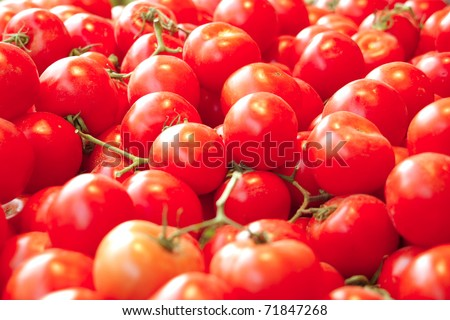 fresh raw lot of tomatoes on counter . shallow dof