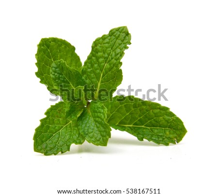 Fresh raw mint leaves isolated. Mint leaves on white background. Green mint leaves #538167511